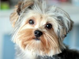 Основные параметры собаки