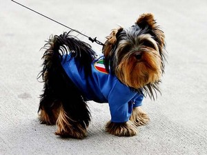 Вяжем свитер для маленькой собачки