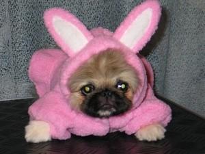Предметы собачьего гардероба