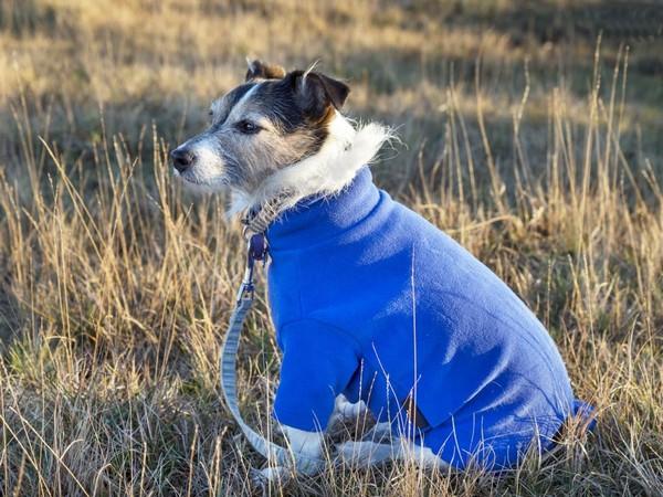 Фотогалерея одежда для джек рассел терьера фото - 9