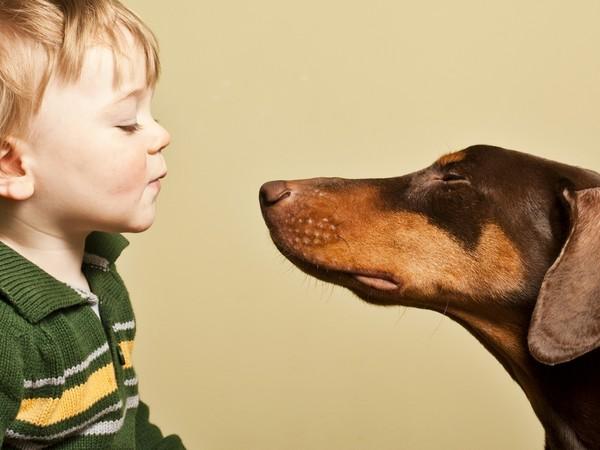 Доберман собака «голубых кровей» фотогалерея - фото 2