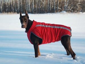 Одежда для собак породы доберман