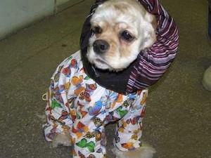 Зачем собаке нужна одежда