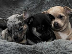 Где купить щенков