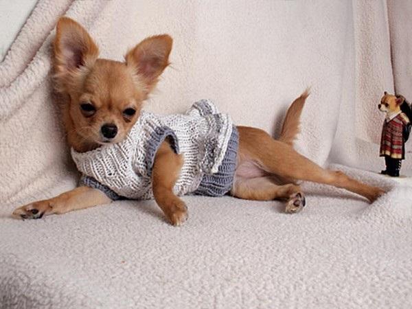Фотогалерея одежда для чихуахуа фото - 8