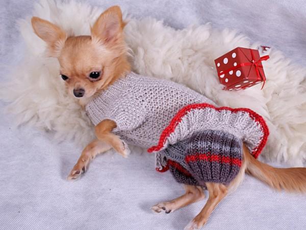 Фотогалерея одежда для чихуахуа фото - 11