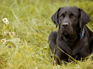 Что входит в рацион питания взрослого пса
