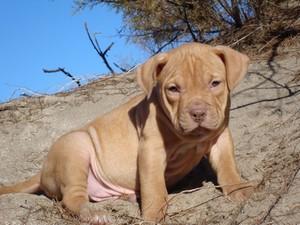 Выбор щенка и кормление