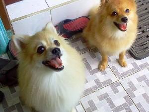 Характер собак