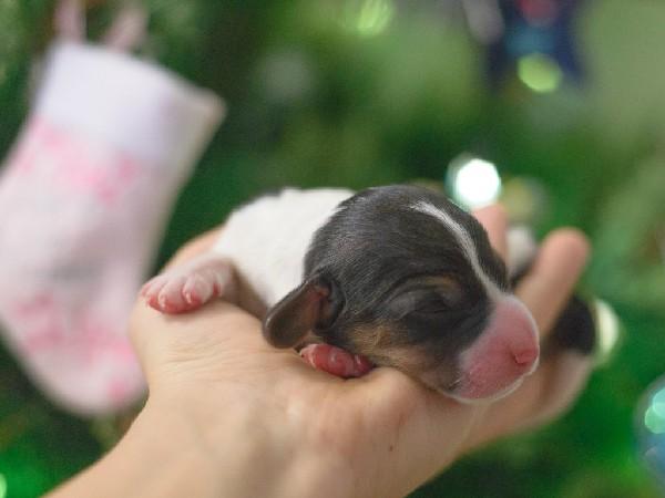 Фотогалерея щенки эстонской гончей фото - 7
